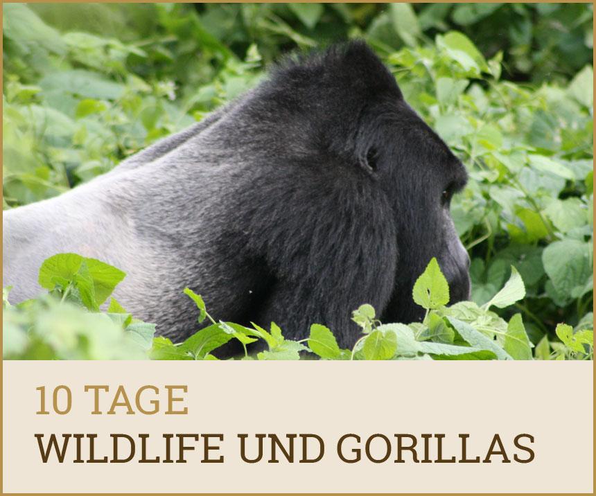 tour10tage-gorillas
