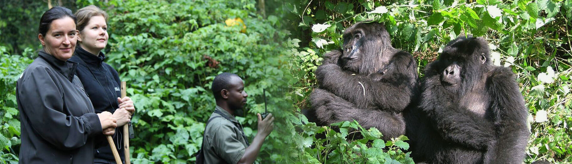 Blog-Gorillatrecking-2