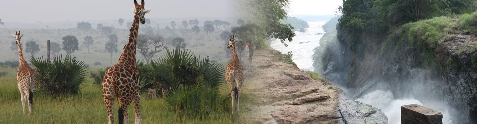 8-TAGE-Uganda-Safari