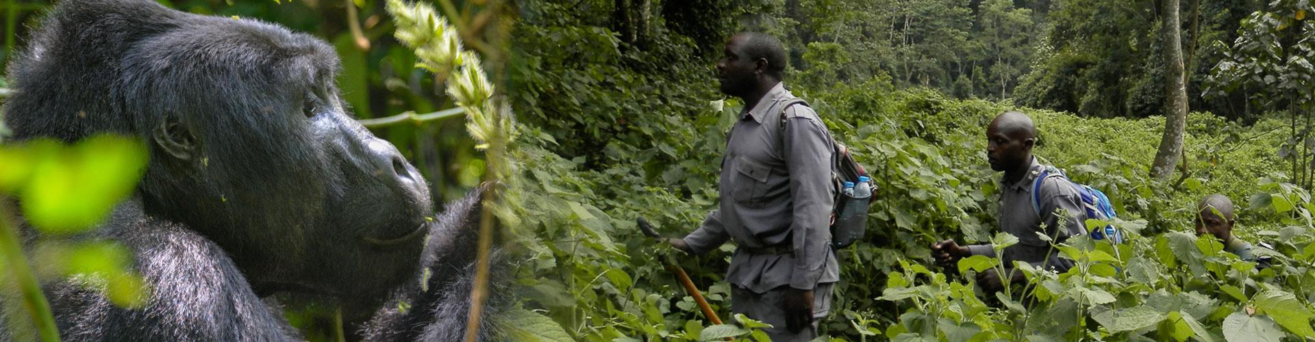 Gorilla-trekking-sanyusafaris